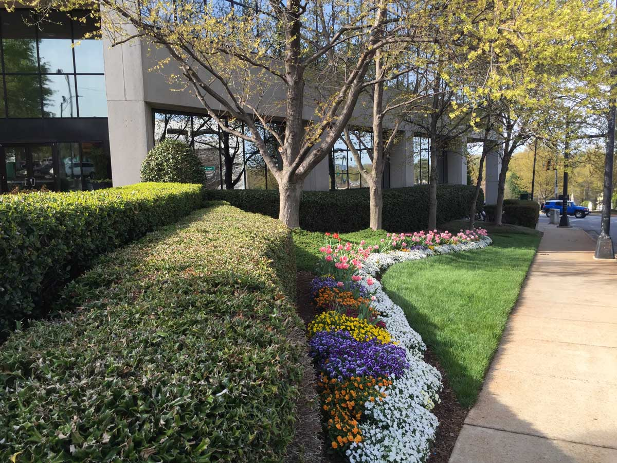 Commercial landscape maintenance 1 full service for Commercial landscaping services