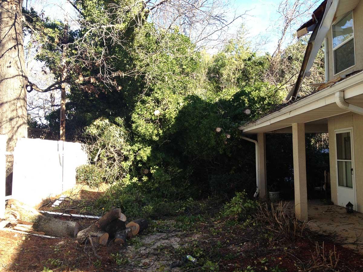 Fallen Tree Emergency 3