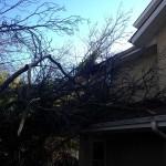 Fallen Tree Emergency 1