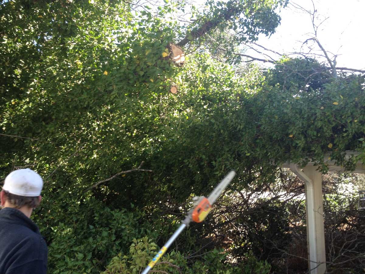 Fallen Tree Emergency 2