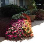 Mature Planting (Seasonal Color)