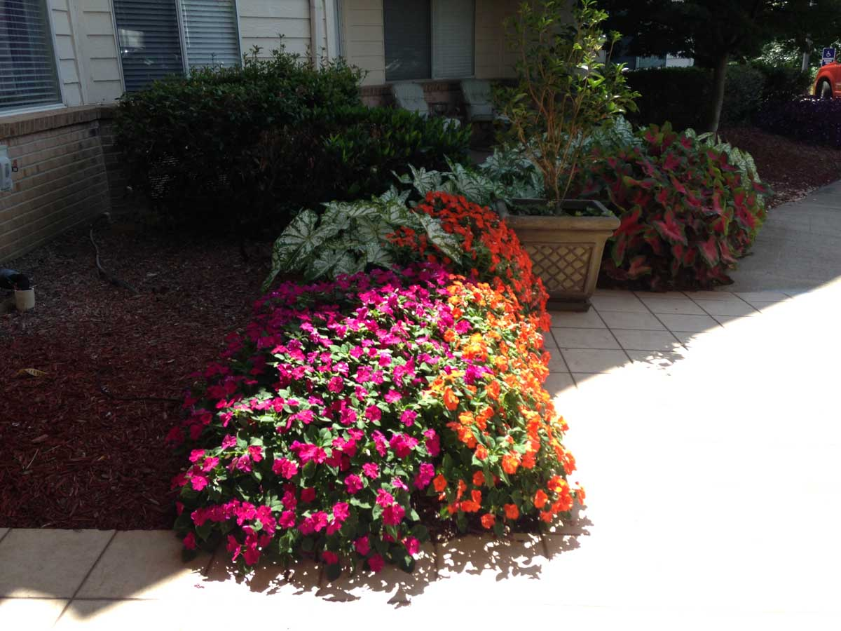 Mature Planting (Seasonal Color)